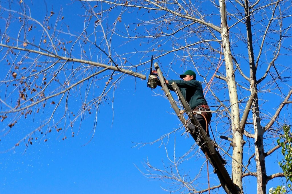 Contact Us-Davie FL Tree Trimming and Stump Grinding Services-We Offer Tree Trimming Services, Tree Removal, Tree Pruning, Tree Cutting, Residential and Commercial Tree Trimming Services, Storm Damage, Emergency Tree Removal, Land Clearing, Tree Companies, Tree Care Service, Stump Grinding, and we're the Best Tree Trimming Company Near You Guaranteed!