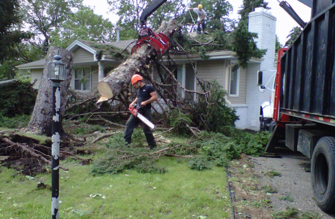 Davie FL Tree Trimming and Stump Grinding Services Home Page Image-We Offer Tree Trimming Services, Tree Removal, Tree Pruning, Tree Cutting, Residential and Commercial Tree Trimming Services, Storm Damage, Emergency Tree Removal, Land Clearing, Tree Companies, Tree Care Service, Stump Grinding, and we're the Best Tree Trimming Company Near You Guaranteed!