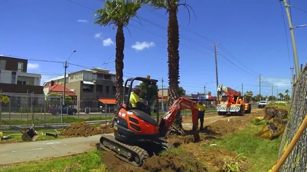 Palm Tree Removal-Davie FL Tree Trimming and Stump Grinding Services-We Offer Tree Trimming Services, Tree Removal, Tree Pruning, Tree Cutting, Residential and Commercial Tree Trimming Services, Storm Damage, Emergency Tree Removal, Land Clearing, Tree Companies, Tree Care Service, Stump Grinding, and we're the Best Tree Trimming Company Near You Guaranteed!