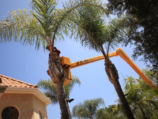 Palm Tree Trimming-Davie FL Tree Trimming and Stump Grinding Services-We Offer Tree Trimming Services, Tree Removal, Tree Pruning, Tree Cutting, Residential and Commercial Tree Trimming Services, Storm Damage, Emergency Tree Removal, Land Clearing, Tree Companies, Tree Care Service, Stump Grinding, and we're the Best Tree Trimming Company Near You Guaranteed!