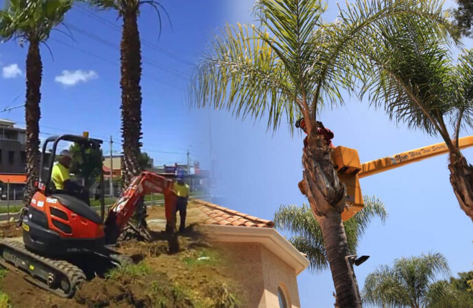 Palm tree trimming & palm tree removal-Davie FL Tree Trimming and Stump Grinding Services-We Offer Tree Trimming Services, Tree Removal, Tree Pruning, Tree Cutting, Residential and Commercial Tree Trimming Services, Storm Damage, Emergency Tree Removal, Land Clearing, Tree Companies, Tree Care Service, Stump Grinding, and we're the Best Tree Trimming Company Near You Guaranteed!