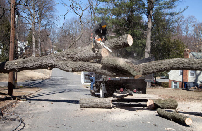 Residential Tree Services-Davie FL Tree Trimming and Stump Grinding Services-We Offer Tree Trimming Services, Tree Removal, Tree Pruning, Tree Cutting, Residential and Commercial Tree Trimming Services, Storm Damage, Emergency Tree Removal, Land Clearing, Tree Companies, Tree Care Service, Stump Grinding, and we're the Best Tree Trimming Company Near You Guaranteed!
