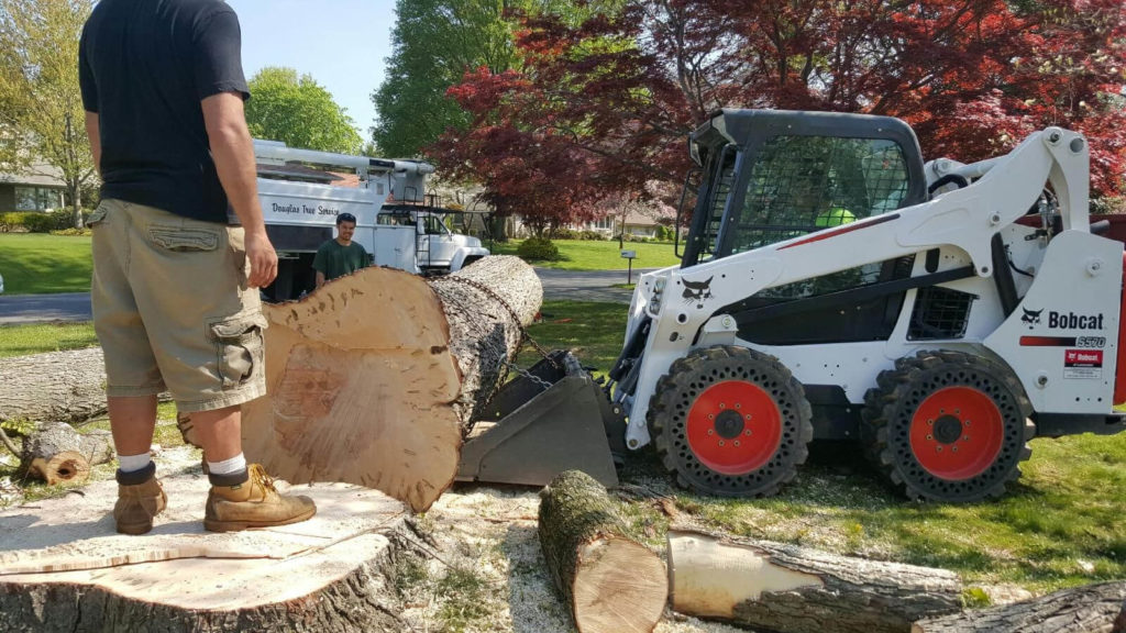 Services-Davie FL Tree Trimming and Stump Grinding Services-We Offer Tree Trimming Services, Tree Removal, Tree Pruning, Tree Cutting, Residential and Commercial Tree Trimming Services, Storm Damage, Emergency Tree Removal, Land Clearing, Tree Companies, Tree Care Service, Stump Grinding, and we're the Best Tree Trimming Company Near You Guaranteed!