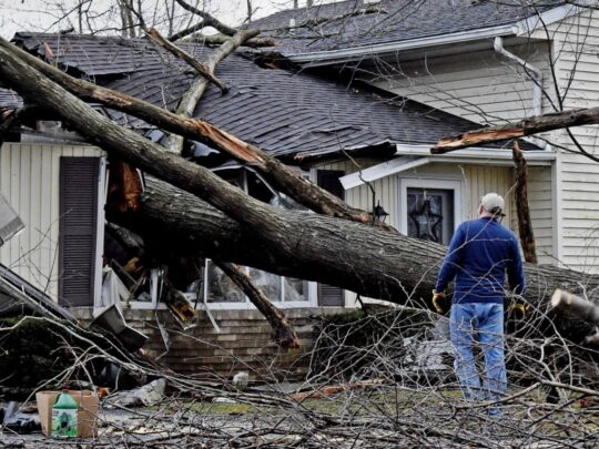 Storm Damage-Davie FL Tree Trimming and Stump Grinding Services-We Offer Tree Trimming Services, Tree Removal, Tree Pruning, Tree Cutting, Residential and Commercial Tree Trimming Services, Storm Damage, Emergency Tree Removal, Land Clearing, Tree Companies, Tree Care Service, Stump Grinding, and we're the Best Tree Trimming Company Near You Guaranteed!