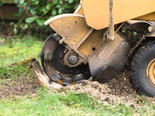 Stump Grinding-Davie FL Tree Trimming and Stump Grinding Services-We Offer Tree Trimming Services, Tree Removal, Tree Pruning, Tree Cutting, Residential and Commercial Tree Trimming Services, Storm Damage, Emergency Tree Removal, Land Clearing, Tree Companies, Tree Care Service, Stump Grinding, and we're the Best Tree Trimming Company Near You Guaranteed!