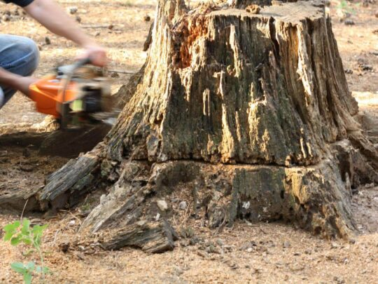 Stump Removal-Davie FL Tree Trimming and Stump Grinding Services-We Offer Tree Trimming Services, Tree Removal, Tree Pruning, Tree Cutting, Residential and Commercial Tree Trimming Services, Storm Damage, Emergency Tree Removal, Land Clearing, Tree Companies, Tree Care Service, Stump Grinding, and we're the Best Tree Trimming Company Near You Guaranteed!