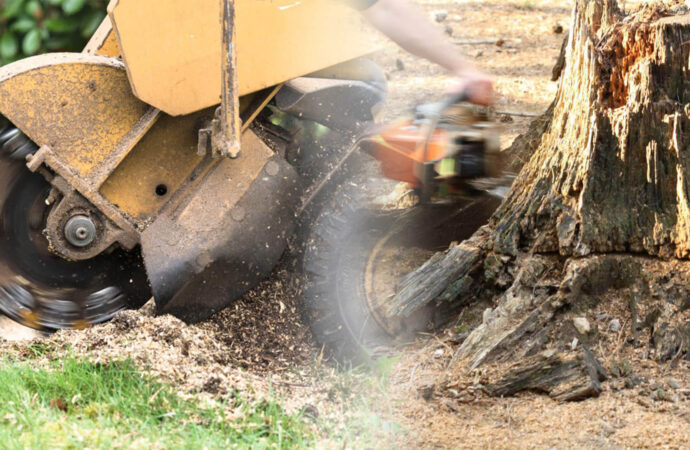 Stump grinding & removal-Davie FL Tree Trimming and Stump Grinding Services-We Offer Tree Trimming Services, Tree Removal, Tree Pruning, Tree Cutting, Residential and Commercial Tree Trimming Services, Storm Damage, Emergency Tree Removal, Land Clearing, Tree Companies, Tree Care Service, Stump Grinding, and we're the Best Tree Trimming Company Near You Guaranteed!