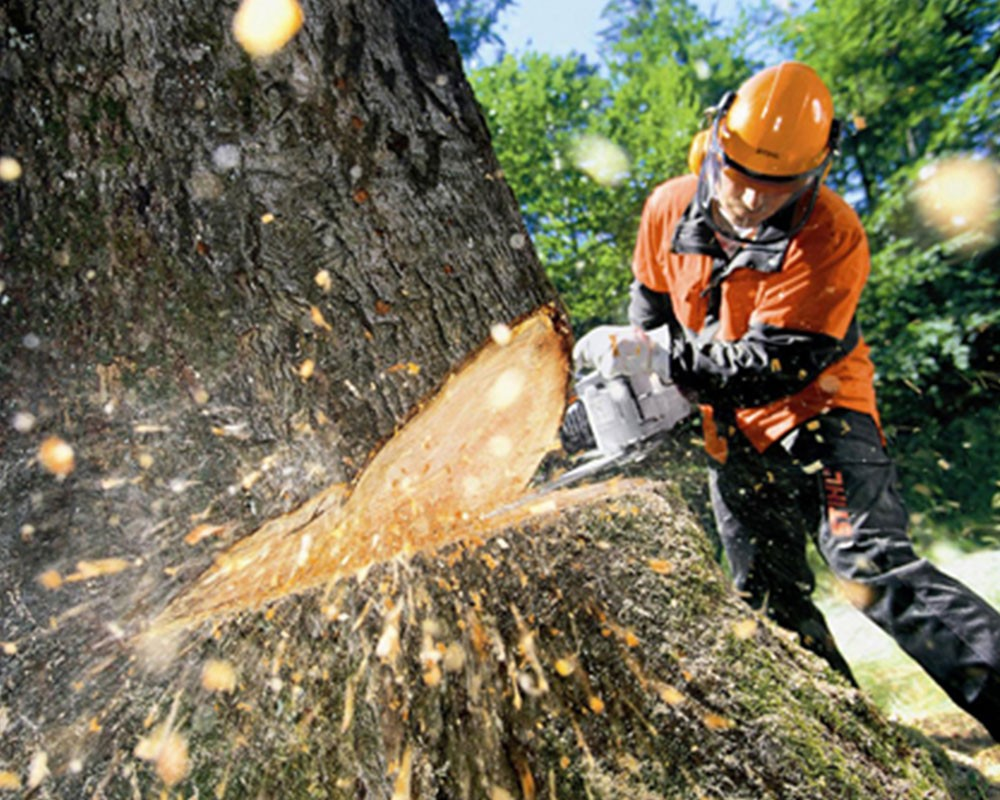 Tree Cutting-Davie FL Tree Trimming and Stump Grinding Services-We Offer Tree Trimming Services, Tree Removal, Tree Pruning, Tree Cutting, Residential and Commercial Tree Trimming Services, Storm Damage, Emergency Tree Removal, Land Clearing, Tree Companies, Tree Care Service, Stump Grinding, and we're the Best Tree Trimming Company Near You Guaranteed!