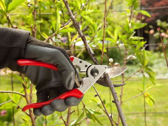 Tree Pruning-Davie FL Tree Trimming and Stump Grinding Services-We Offer Tree Trimming Services, Tree Removal, Tree Pruning, Tree Cutting, Residential and Commercial Tree Trimming Services, Storm Damage, Emergency Tree Removal, Land Clearing, Tree Companies, Tree Care Service, Stump Grinding, and we're the Best Tree Trimming Company Near You Guaranteed!