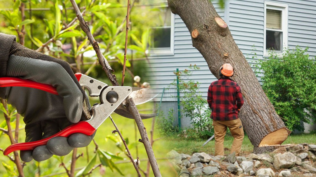 Tree pruning & tree removal-Davie FL Tree Trimming and Stump Grinding Services-We Offer Tree Trimming Services, Tree Removal, Tree Pruning, Tree Cutting, Residential and Commercial Tree Trimming Services, Storm Damage, Emergency Tree Removal, Land Clearing, Tree Companies, Tree Care Service, Stump Grinding, and we're the Best Tree Trimming Company Near You Guaranteed!